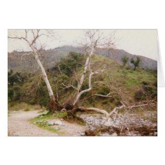 Arroyo Karte