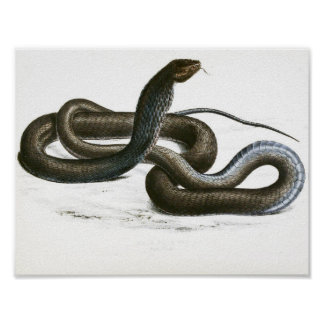 Art noir vintage du Roi cobra