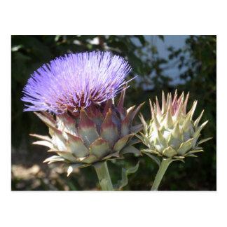 Artischocken-Blumen Postkarte