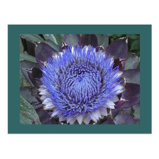 Artischocken-Blüten-Postkarte Postkarte