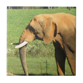 Asiatische Elefant-Fliese