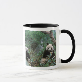 Asien, China, Chengdu. Panda-Schongebiet - 2 Tasse