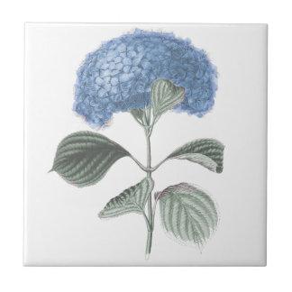 Atemberaubende blaue Hydrangea-Blume Kleine Quadratische Fliese