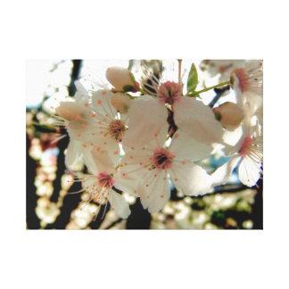 Atemberaubende klassische weiße Kirschblüte-Blüte Leinwanddruck