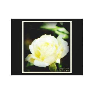 Atemberaubende weiße Rose Leinwanddruck