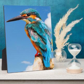 Atemberaubender Eisvogel Fotoplatte