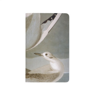 Audubon: Bonapartes Möve Taschennotizbuch