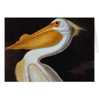 Audubon: Großer weißer Pelikan Karte