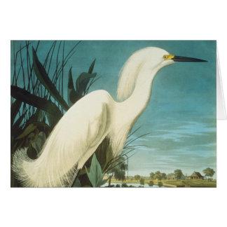Audubon: Reiher Karte