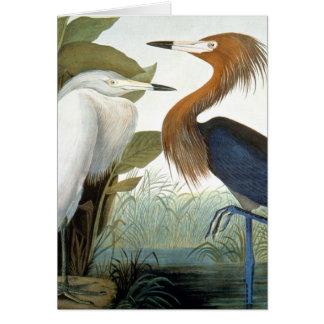 Audubon: Rötlicher Reiher oder lila Reiher Karte
