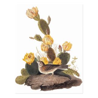 Audubon Vesper Spatz und Kaktusfeige-Kaktus Postkarte