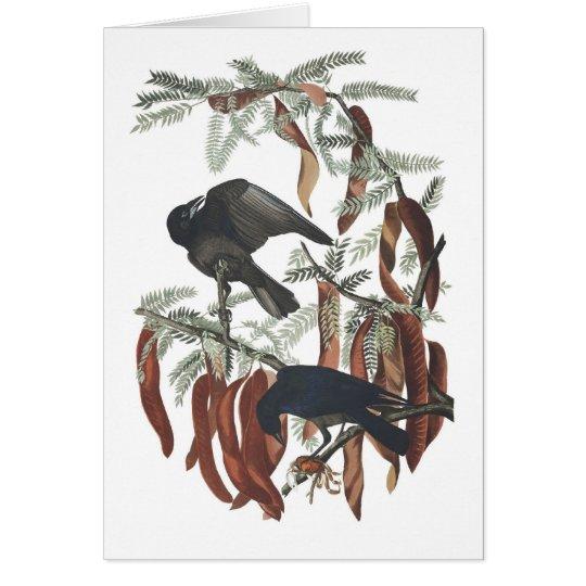 Audubons Fisch-Krähe Karte
