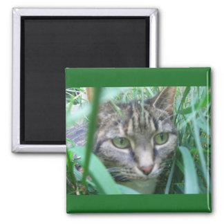 Auf dem Jagd-Katzen-Magneten Quadratischer Magnet