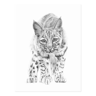 Auf dem Prowl ein junger Rotluchs Postkarte