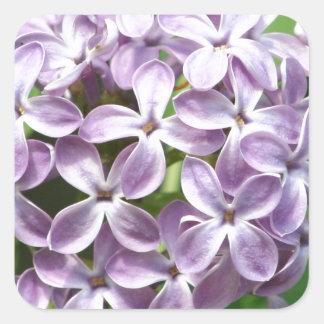 Aufkleber mit Foto der schönen lila Fliedern