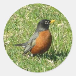 Aufkleber Nordamerikaners Robin