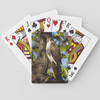 Aufmerksamer Falke Spielkarten