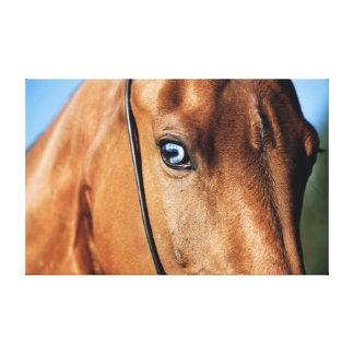 Auge des Pferds. Pferdesammlung Leinwanddruck