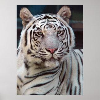 Auge des Tigers Poster