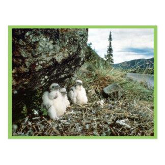 Ausländisch Postkarte