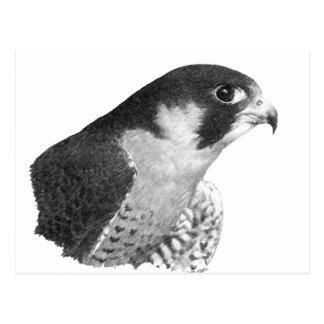 Ausländischer Falke-Bleistift Postkarte