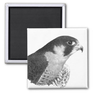 Ausländischer Falke-Bleistift Quadratischer Magnet