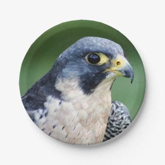 Ausländischer Falke-Gesichts-Foto Pappteller