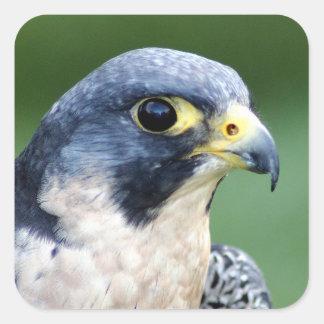 Ausländischer Falke-Gesichts-Foto Quadratischer Aufkleber