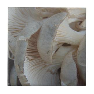 Austern-Pilze Kleine Quadratische Fliese