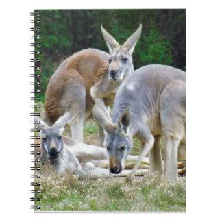 Australische Kängurus, die im Sun sich entspannen Spiral Notizbuch