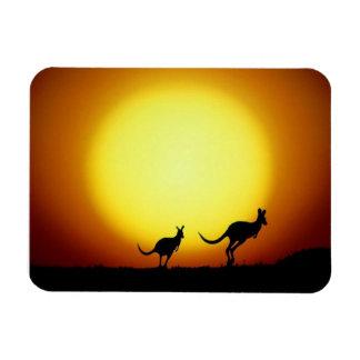 Australische Kängurus silhouettiert gegen einen Rechteckige Magnete