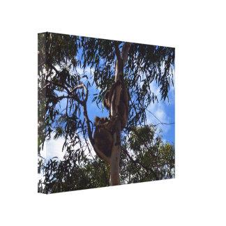 Australische wilde Koala-Bären, Leinwanddruck