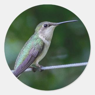 Autocollant bleu et vert de colibri - rond