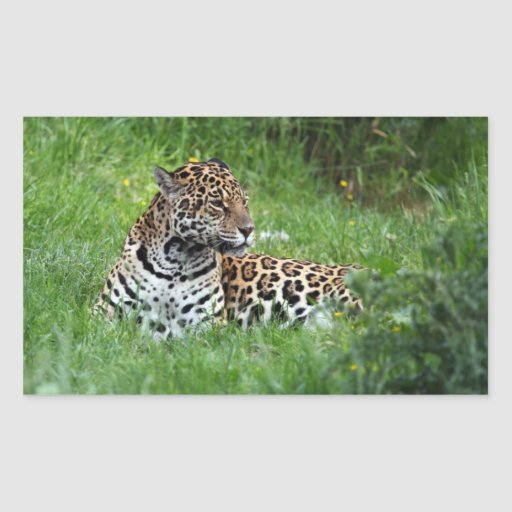 Autocollant de Jaguar