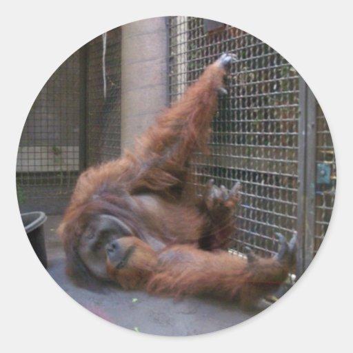 autocollant espiègle d'orang-outan