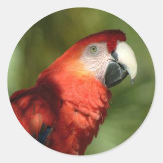Autocollants de perroquet
