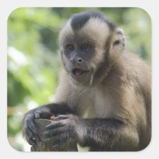 Autocollants espiègles de singe
