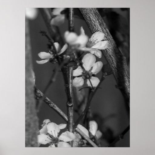 B&W floral - fleurs sensibles 2 Poster