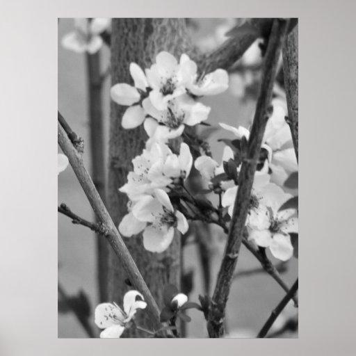 B&W floral - fleurs sensibles Posters