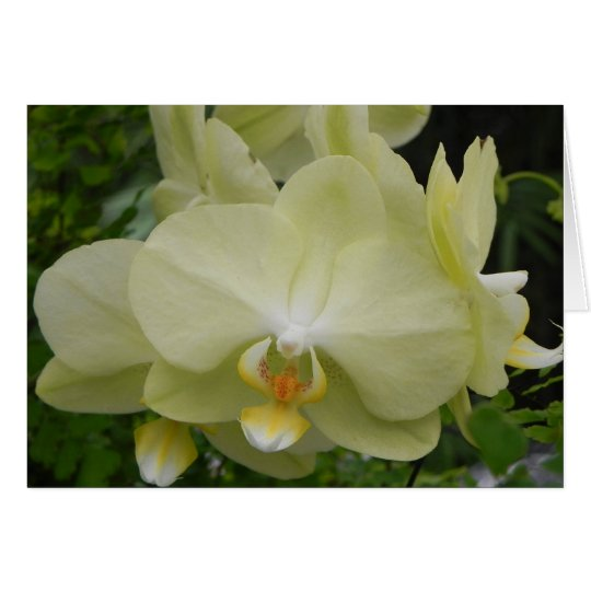 Baby-gelbe Orchideen-Anmerkungs-Karte Karte