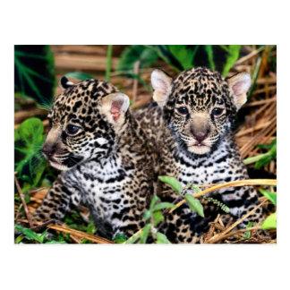 Baby Jaguar CUB Postkarte