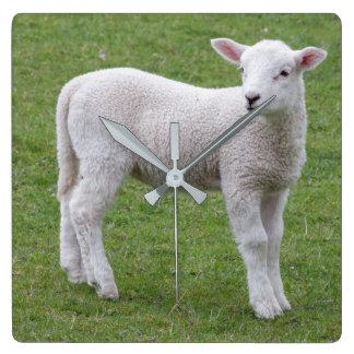 Baby-Lammuhr Quadratische Wanduhr