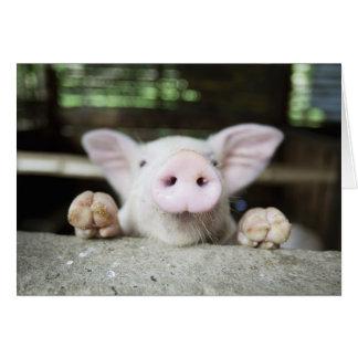 Baby-Schwein im Stift, Ferkel Karte