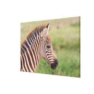 Baby Zebrakopf, Tansania Leinwanddruck