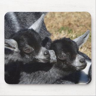 Baby-Ziegen an einem sonnigen Tag Mauspad