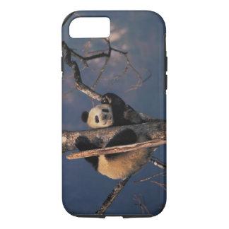 Babypanda, der auf Baum, Wolong, Sichuan spielt iPhone 8/7 Hülle