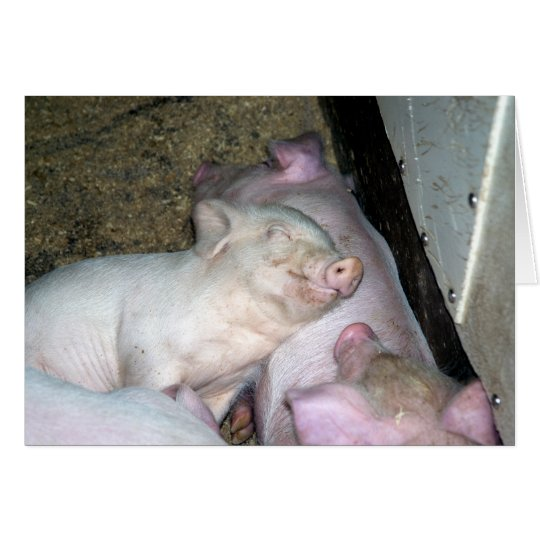 Babyschweine Grußkarte