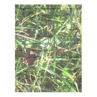 Backsteinmauer-Gras Postkarte