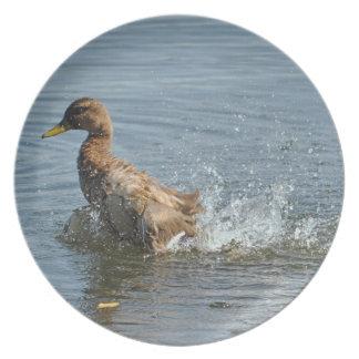Baden der Stockenten-Enten-u. Melaminteller