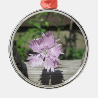 Bäderrosa Dianthus auf Zaun Silbernes Ornament
